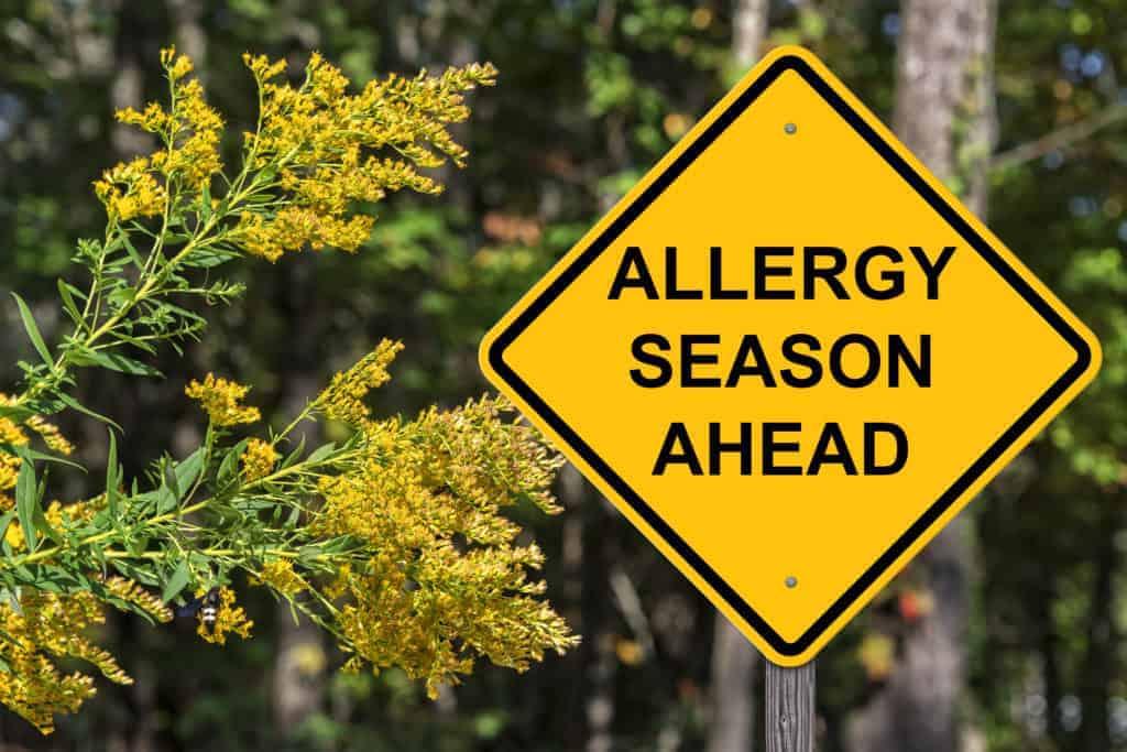 Allergia szezon
